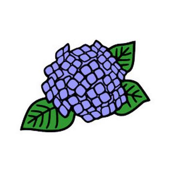 紫陽花(アジサイ)のイラスト | 素材屋小秋