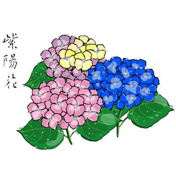 日本の素材/イラスト別・あじさい