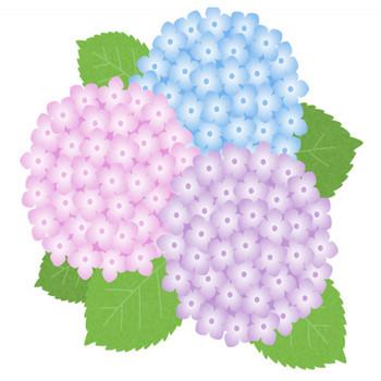【梅雨のイラスト】紫陽花(あじさい)の花 | 無料フリーイラスト素材集【Frame illust】