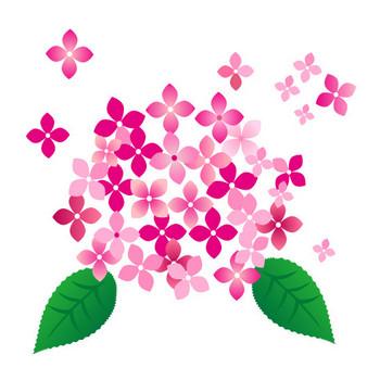 ピンクの紫陽花の花イラスト