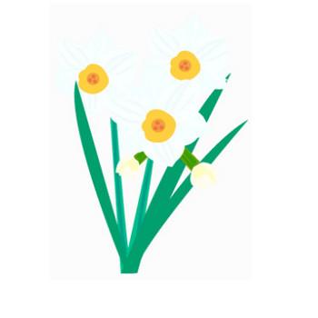 水仙のイラスト素材 | イラスト素材パラダイス 商用利用無料のイラスト素材