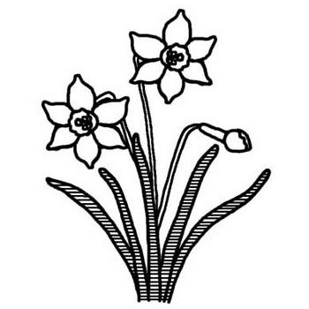 スイセン(水仙)2/冬の花/無料【白黒イラスト素材】