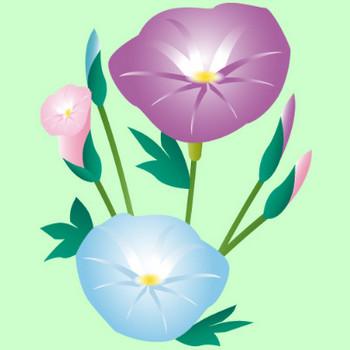 夏の花|無料イラスト|ダウンロード|PNG/朝顔1