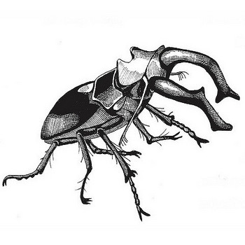 All sizes | stag beetle | Flickr - Photo Sharing!