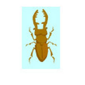 クワガタ | イラスト素材 | 動物のフリー(無料)素材