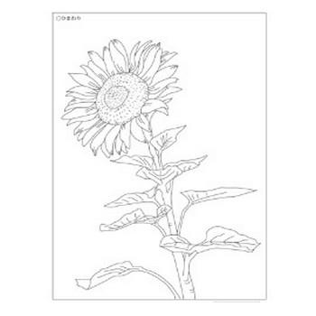8月の花ぬりえ - 塗り絵のじかん