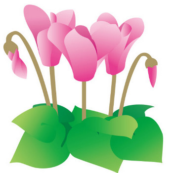 冬の花1-13-シクラメン-花の無料イラスト素材-イラストポップ