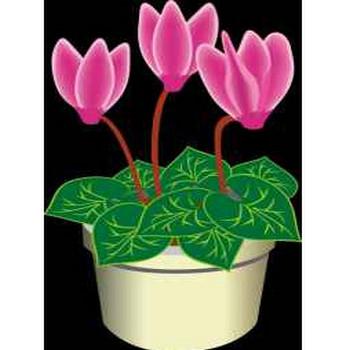 シクラメン 無料素材 : 10月の花のイラスト素材画像集【菊・パンジー ...: 無料素材記録係