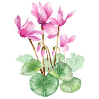 冬のイラストNo.074『シクラメンの花』/無料のフリー素材集【花鳥風月】