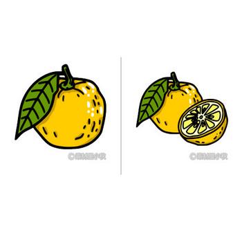 柚子(ゆず)のイラスト | 素材屋小秋