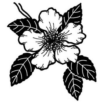サザンカ(山茶花)2/秋の花/無料【白黒イラスト素材】
