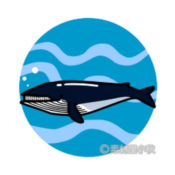 鯨(クジラ)のイラスト | 素材屋小秋