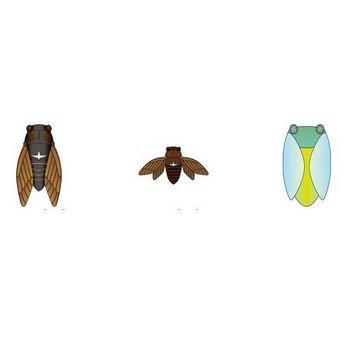 イラストポップ | 昆虫-セミのイラスト無料素材