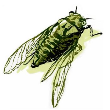 WIP ~ Cicada – Kirsti Wakelin