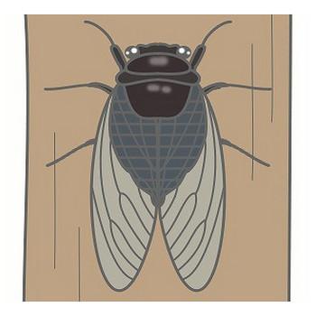 幼稚園児のイラスト・絵カード:セミのイラスト・絵カード素材|夏の虫のイラスト