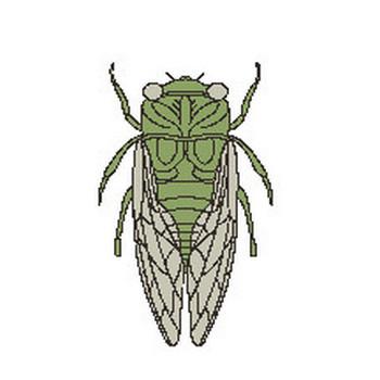 (セミ)蝉の壁紙 元画像・無料素材/壁紙TANK