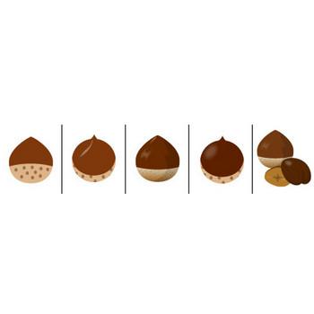 栗やクリ、天津甘栗などくりのイラスト素材