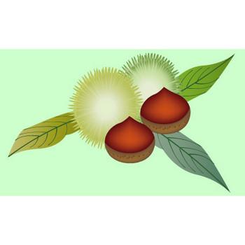 秋の食べ物 無料イラスト ダウンロード PNG/栗