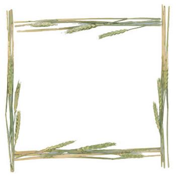 葉っぱ・草木のイラスト・フリー素材/フレーム枠No.087『すすき・緑』