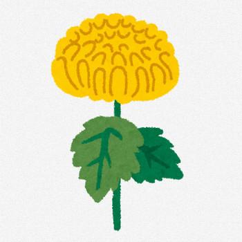 菊のイラスト「黄色い菊」 | かわいいフリー素材集 いらすとや