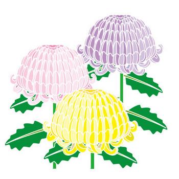 秋の花2-14-菊-花の無料イラスト素材-イラストポップ