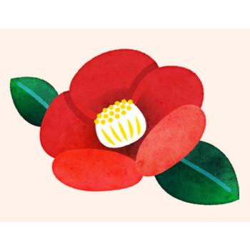 椿の花のイラスト – PENTA – 登録不要・商用フリーのイラスト素材サイト