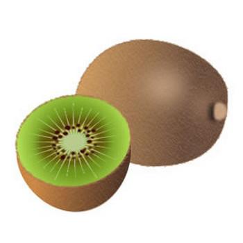 果物-キウイフルーツイラスト 画像フリー素材|無料素材倶楽部