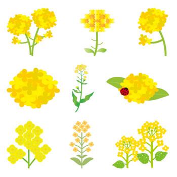 [フリーイラスト] 9種類の菜の花のセットでアハ体験 - GAHAG | 著作権フリー写真・イラスト素材集