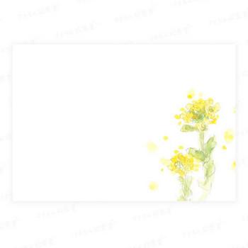 菜の花のイラストの絵はがき|さきちん絵葉書
