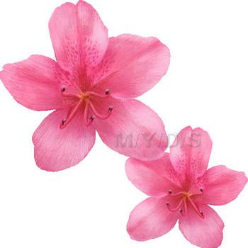 (躑躅、躑蠋の花)ツツジの花のイラスト・条件付フリー素材集