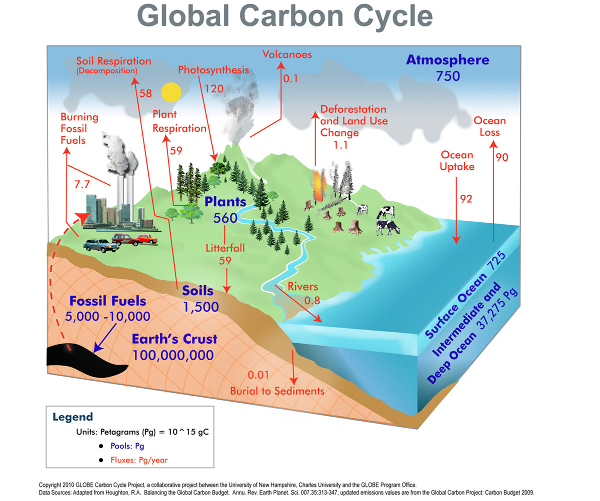Origami Carbon Cycle Infographic Forest Planet