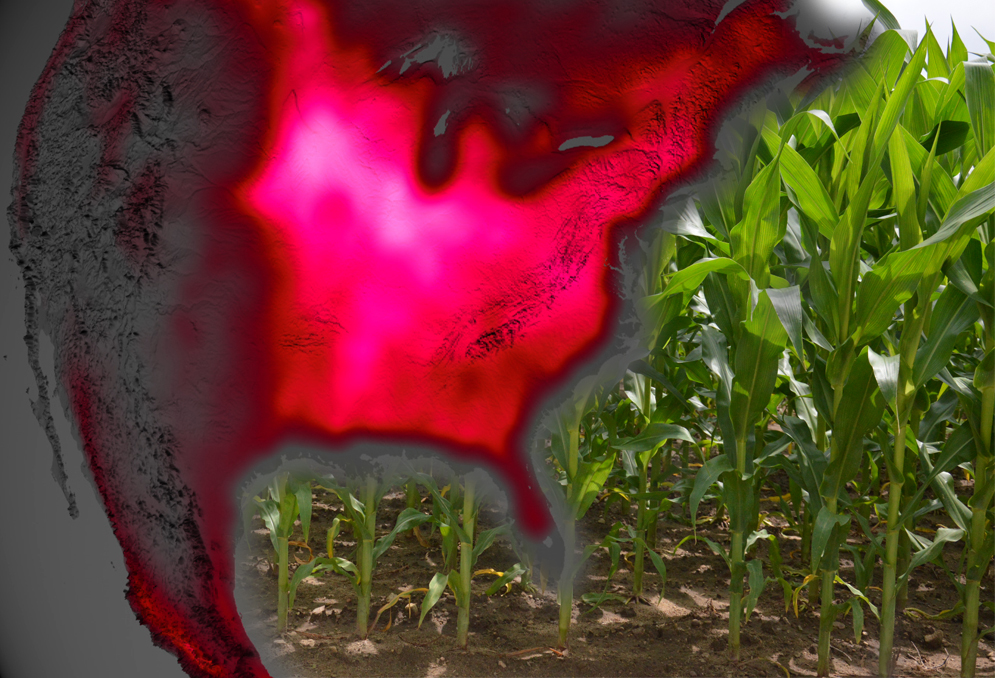 Satellite Shows High Productivity From U S Corn Belt Nasa