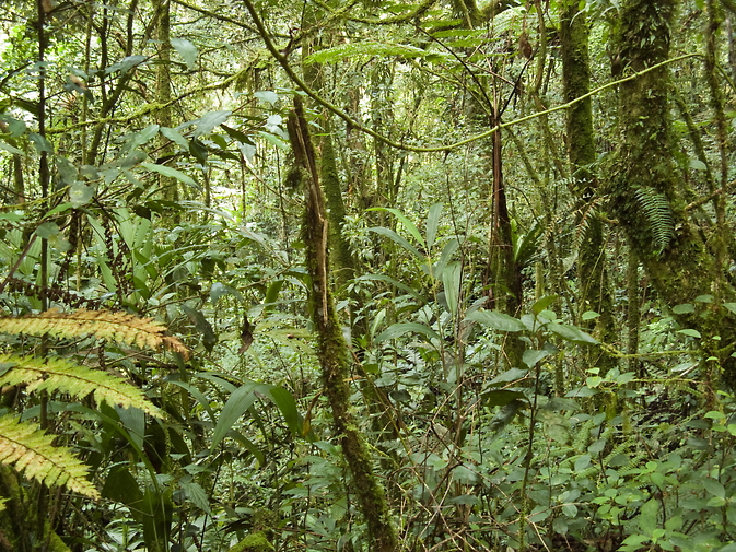 tropical forest in Malaysia