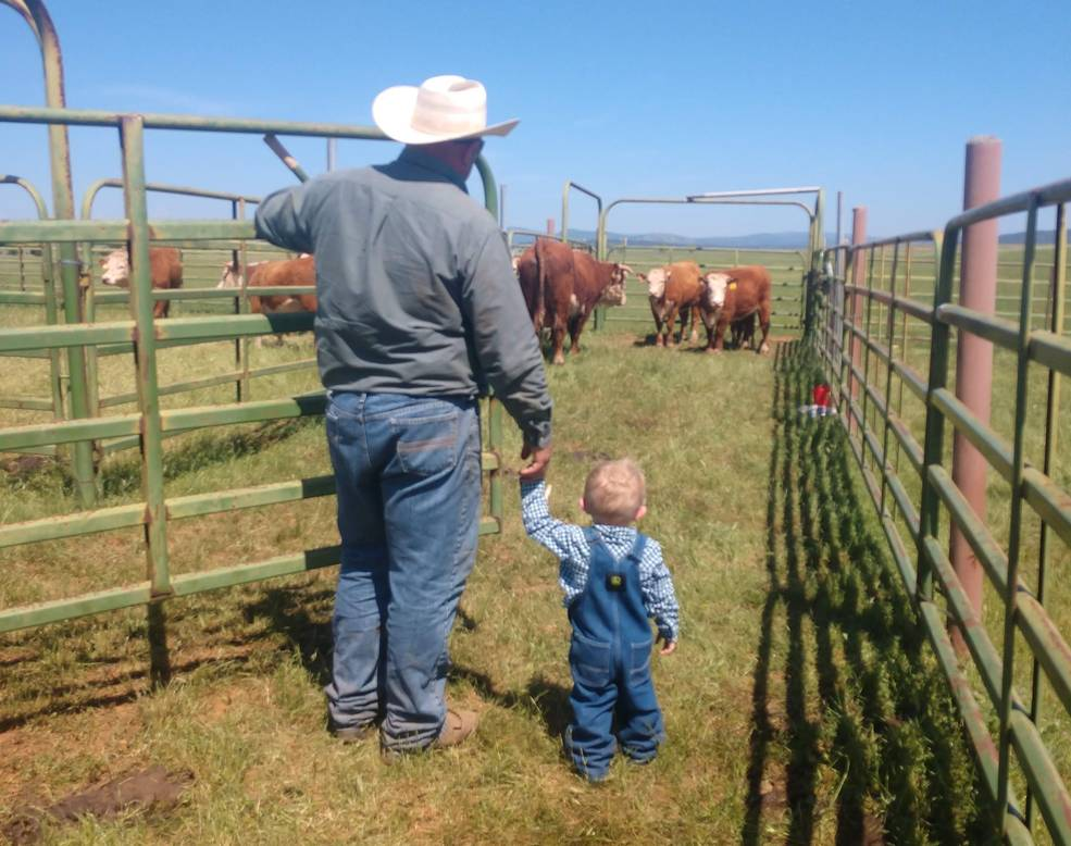 Tracy's partner, Ryan Imbach (left), takes their son Colton (right) to the corral to check on the herd. The grass in the pasture where the Schohrs keep their cows during the winter was drying up.