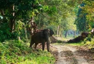Nijerya'daki Milli Parkların Özellikleri