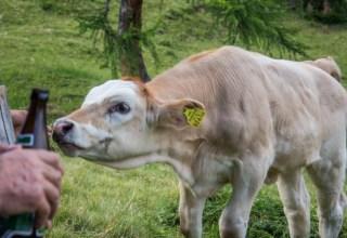 Hayvancılık Ve Atıkların Depolanması