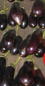 Italian Egg Plant
