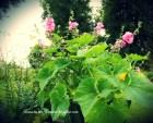 ogrody-polskie-15