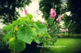ogrody-polskie-2