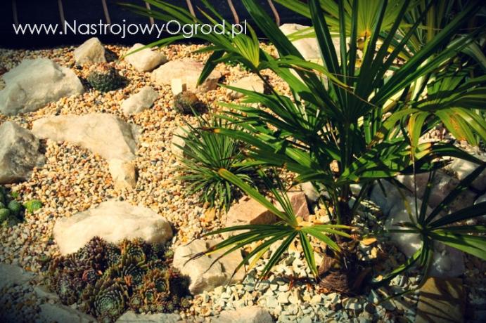 kaktusy-w-ogrodzie-5