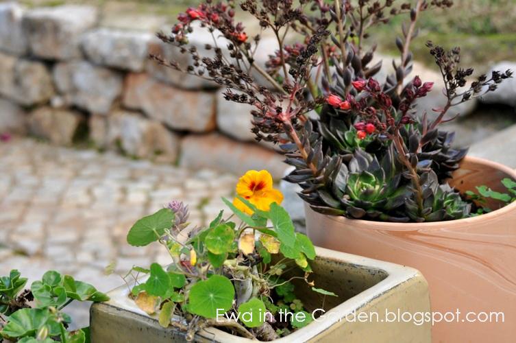 kwiaty-w-ogrodzie-11