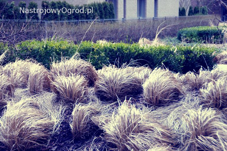 ogród-trawy-7