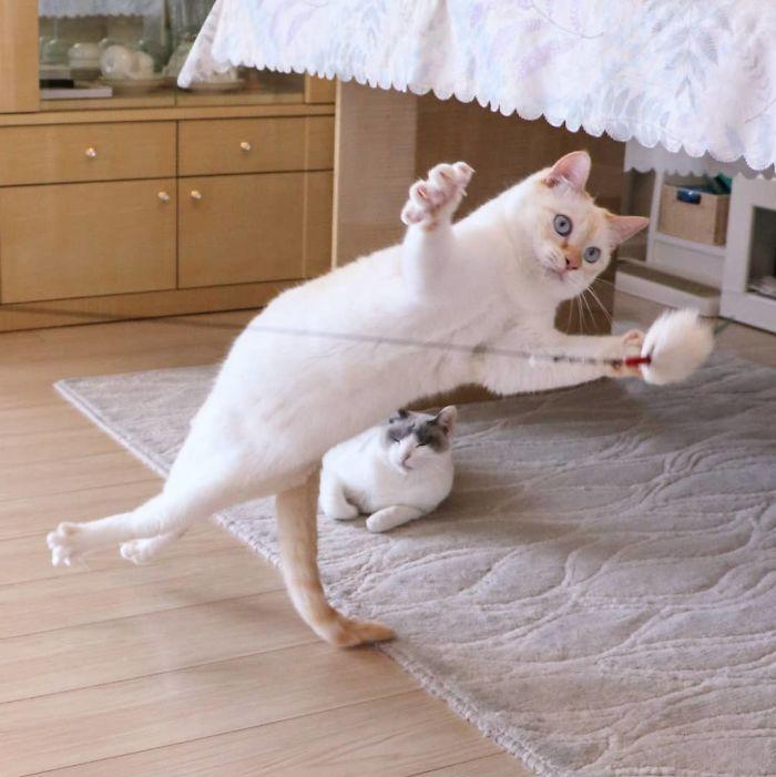 Знакомьтесь: Чако, кот-ниндзя из Японии