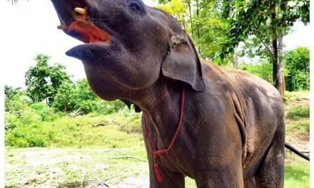 Świat słoni w Kanchanaburi – Tajlandia