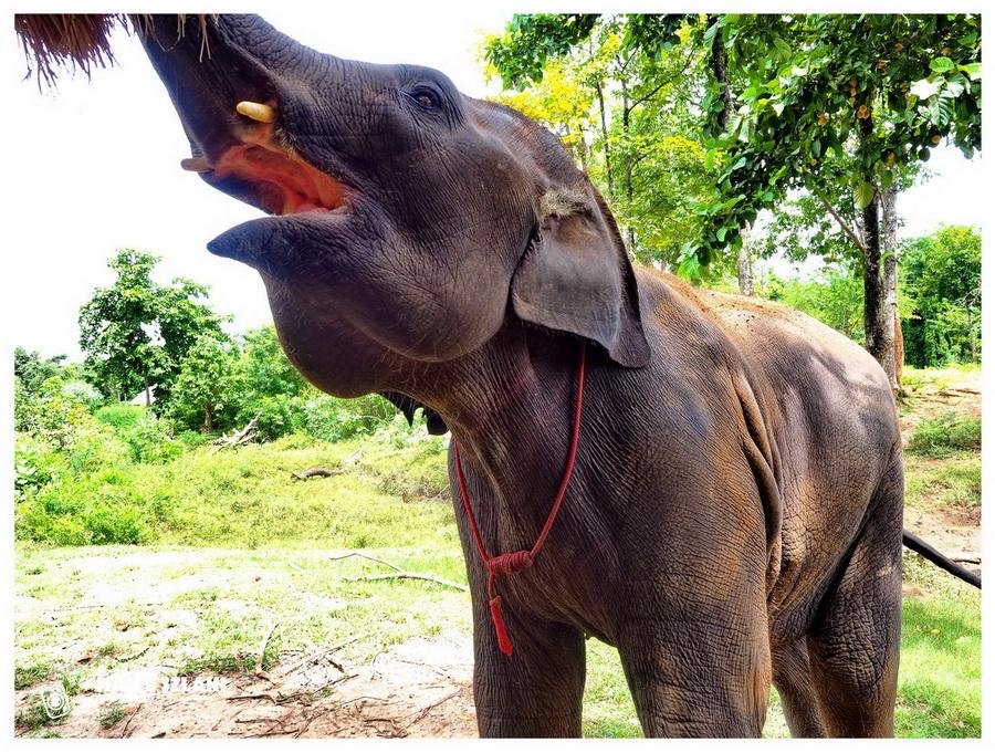Elephants-World-tajlandia-azja-słonie-zwierzęta-ochrona-podróże-atrakcje-turystyczne-bangkok