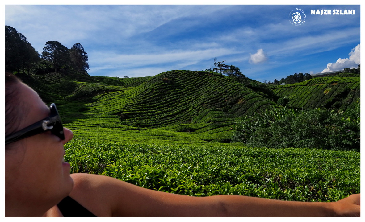 Cameron Highlands - Malezja