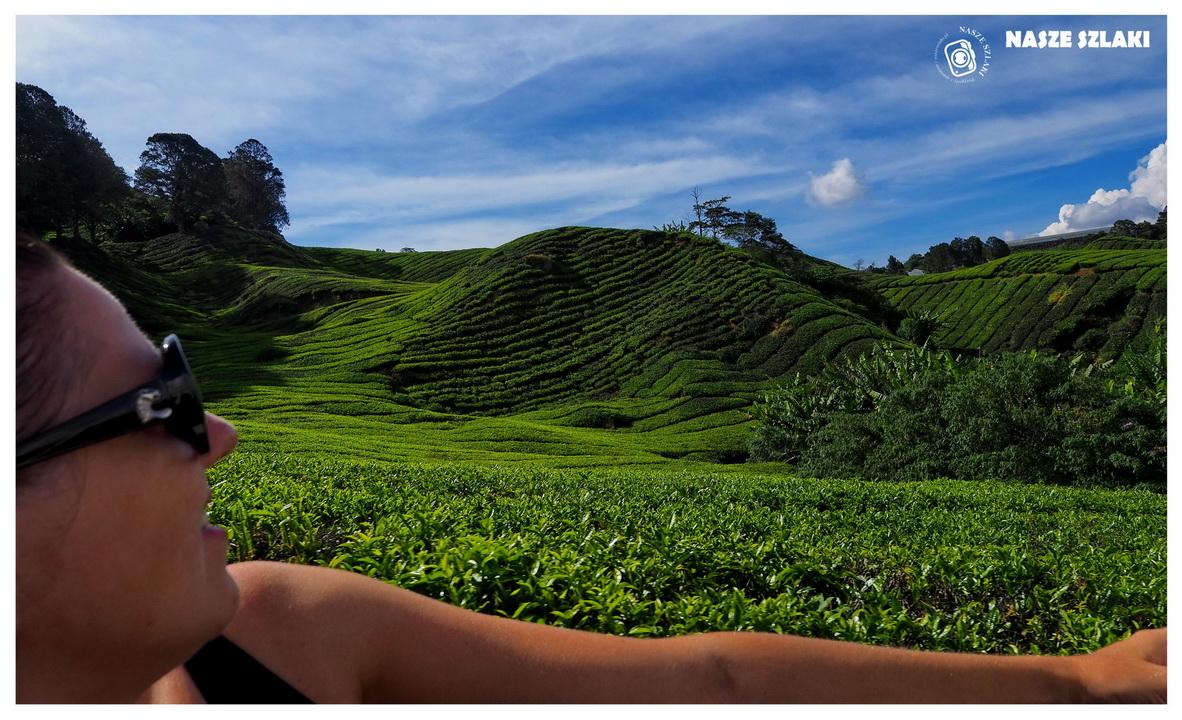 Cameron Highlands - Malezja