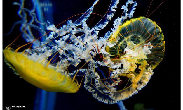 S.E.A. Aquarium Marine Life Park – Singapur