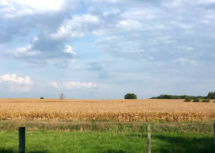 Corn field Fort Wayne, Mama ía