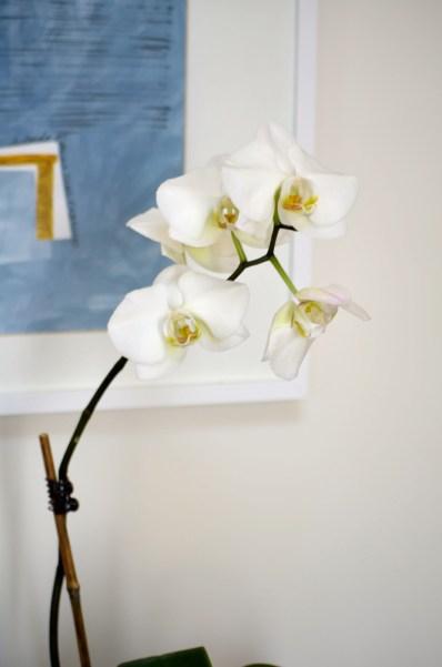 Orchid, Mama ía blog